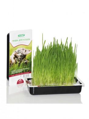 Трава для кошек Titbit