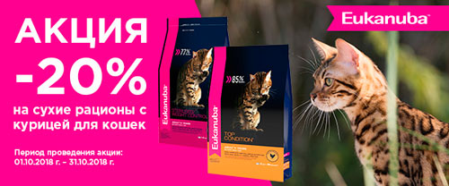 Скидка 20% на корма для кошек Eukanuba