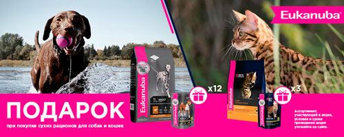 При покупке корма Eukanuba для кошек 2 кг – 3 пауча в подарок!